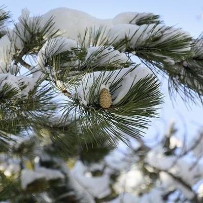 Синоптики предупреждают о сильных снегопадах в Украине