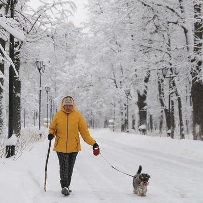 В столице в субботу обещают до 17 см снега