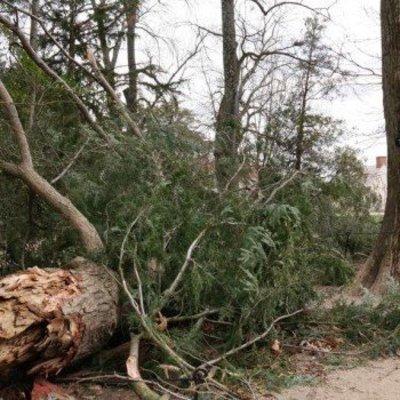 Шторм в США сломал 227-летнее дерево, которое посадил Джордж Вашингтон