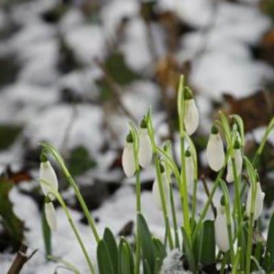 С 6 марта в Украине начнется потепление
