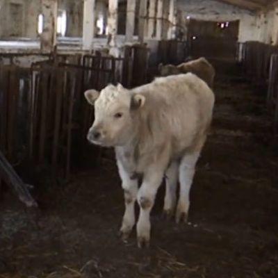 Фермер оставил умирать от голода десятки животных