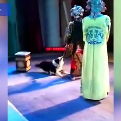 В Китае собака выбежала на сцену и вцепилась в оперного певца