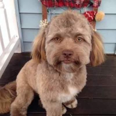 Собака с человеческим лицом покорила Instagram