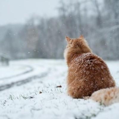 В Украине на выходных похолодает до -16°