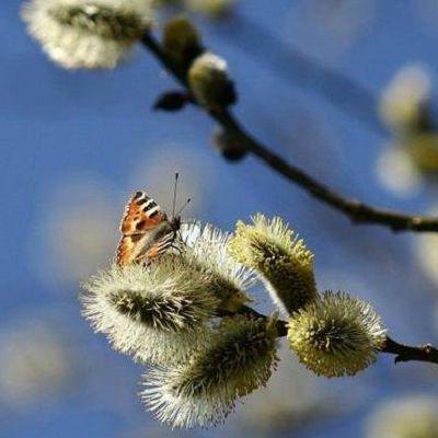 1 апреля в Украину придет резкое потепление