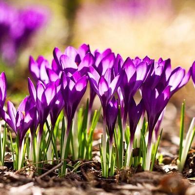 В Украину пришла весна: теплее всего на Западе, а прохладнее - на Востоке
