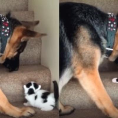 Собака, помогающая котенку подняться по лестнице, стала звездой YouTube