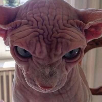 Самый злобный кот в мире покорил Instagram