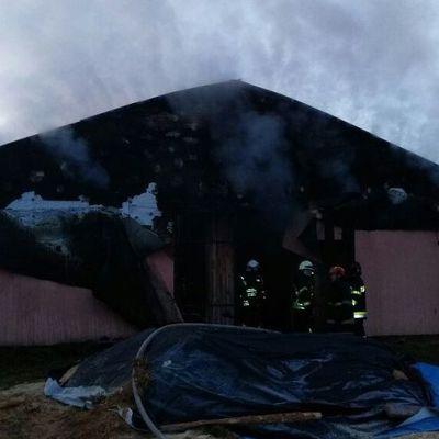 Под Киевом пожар в конюшне унес жизни четырех лошадей