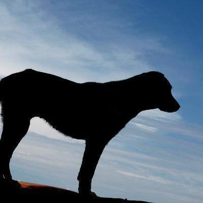 В Германии домашняя собака загрызла младенца