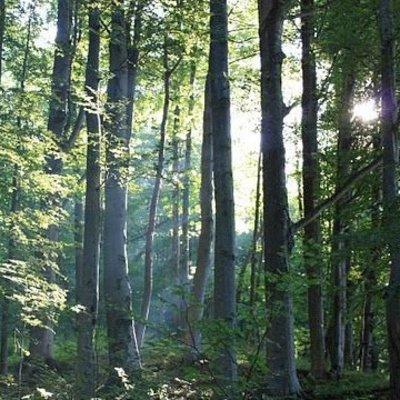 В Карпатах потерялся 90-летний турист из Червонограда