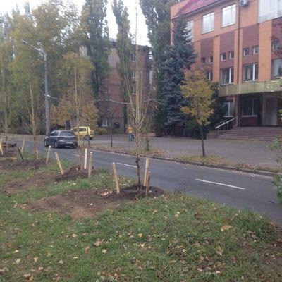 В Киеве высадят антиаллергенные тополя