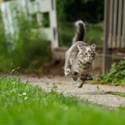 На Одессщине пенсионер пугая котов обстрелял дом