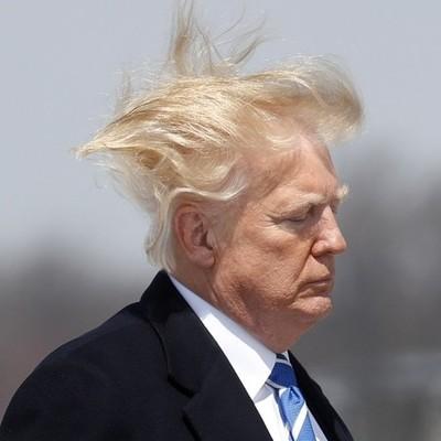 О президенте США Дональде Трампе будет снят фильм под названием