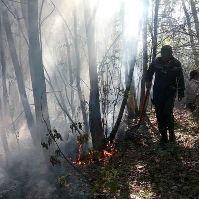 В Киеве два часа тушили траву и деревья на Трухановом острове (фото)