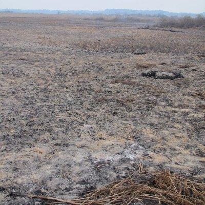 Во Львовской области горит 10-гектарный торфяник