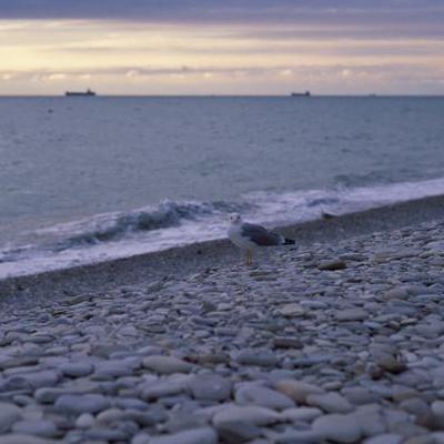 На побережье Черного моря россиянин забил камнями двоих мужчин «за нецензурную брань»