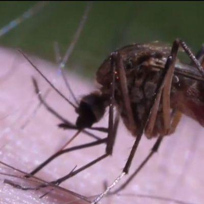 В Украине из-за теплой погоды увеличилось количество комаров (видео)