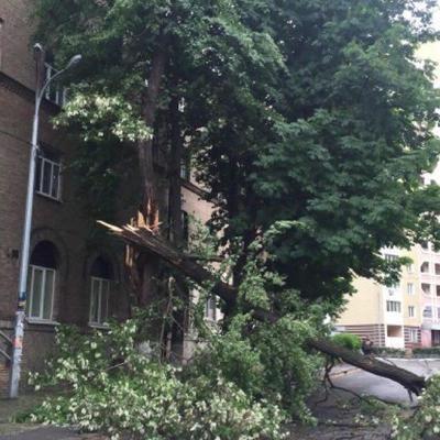 В Киеве шквальный ветер валит деревья (фото)
