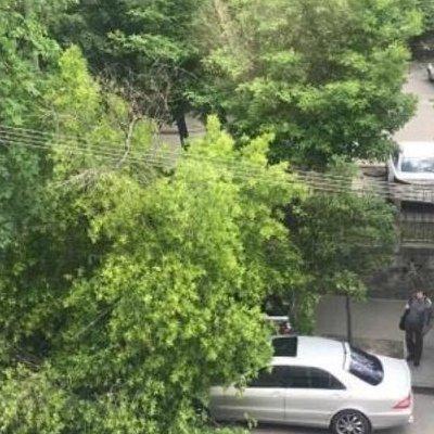 В Киеве дерево рухнуло на иномарку