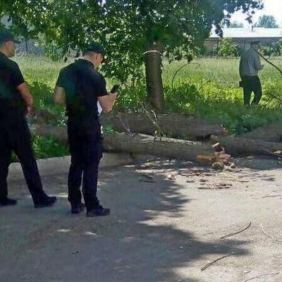 В Черкассах на школьников упало дерево во время экскурсии