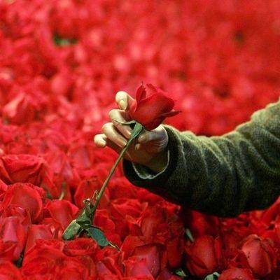 В Днепре мужчины до смерти забили сторожа парка за замечание о краже роз