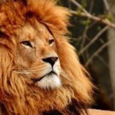 На Тернопольщине в зоопарке лев набросился на подростка