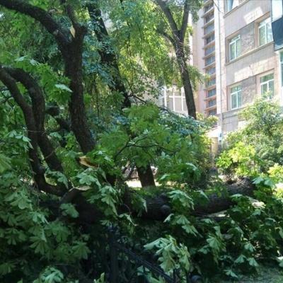 В центре Киева на припаркованные автомобили упало дерево