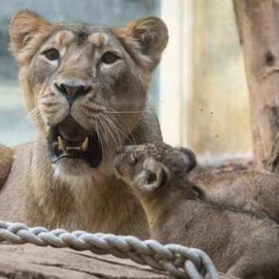 В Германии из зоопарка сбежали опасные животные