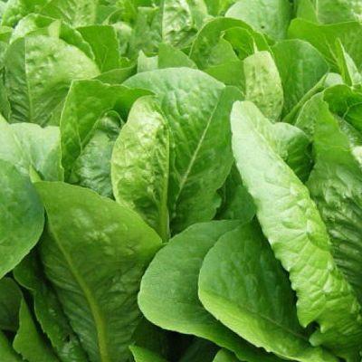 В США после потребления салата умерли пять человек