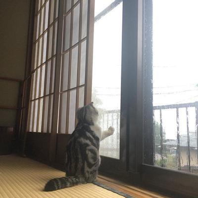 В Японии открылся необычный отель