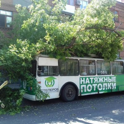 В Запорожье дерево упало на троллейбус с пассажирами