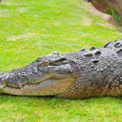 В Эфиопии крокодил убил священника, который крестил людей в озере