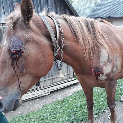 На Закарпатье мужчина привязал коня к машине и протащил его по асфальту