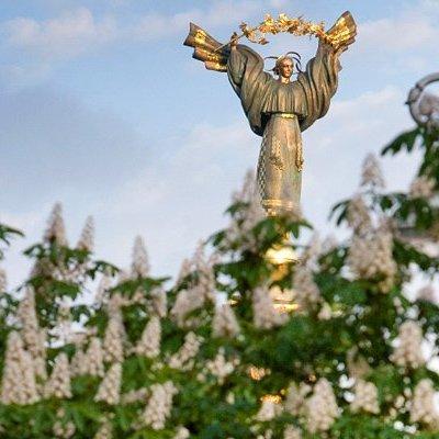 «Выбери дерево для Крещатика!»: киевлянам предложили выбрать деревья для главной улицы столицы