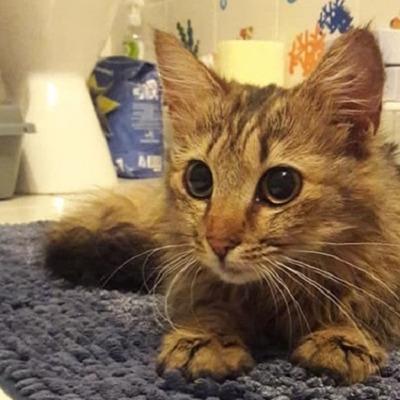 Стала известна судьба кошки, которая поела колбасы в киевском супермаркете