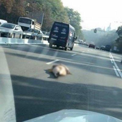 В Киеве голая женщина лежала посреди дороги, ожидая любви (видео 18+)