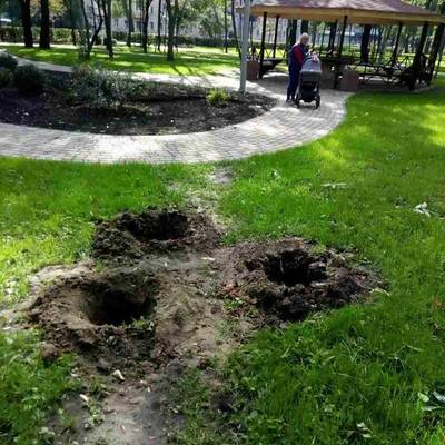 В киевском парке за ночь украли свежепосаженные деревья