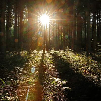 Погода на сегодня: в Украине без осадков, солнечная погода