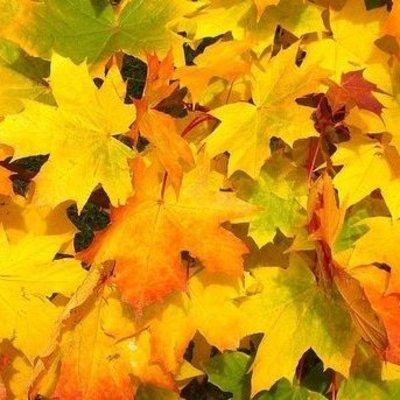 В Киеве придумали, что делать с опавшими листьями