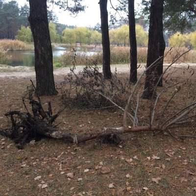 В столичном парке вандалы выкорчевали недавно посаженные деревья (фото)