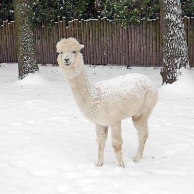 В киевском зоопарке животные встретили первый снег (фото)