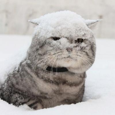 В Киеве в ближайшие дни ожидается до 18 см снега