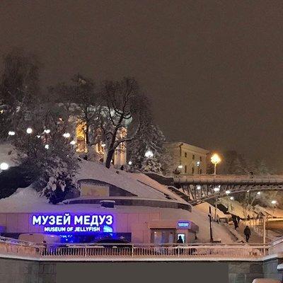 В Киеве открылся музей медуз