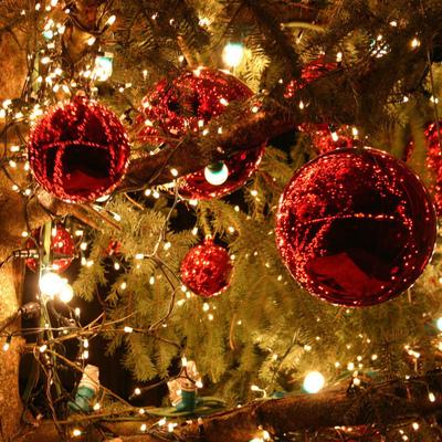 Киевляне смогут утилизировать новогодние елки во всех районах столицы (адреса)