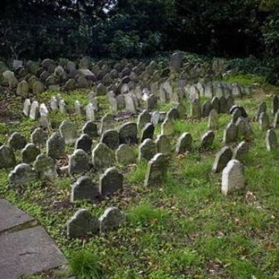 В столице появится официальное кладбище домашних животных