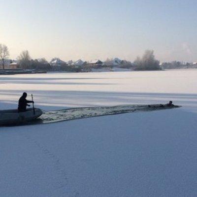 Под Киевом лебеди примерзли ко льду озера