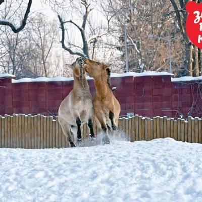 Как проходит зимовка животных киевского зоопарка (фото)