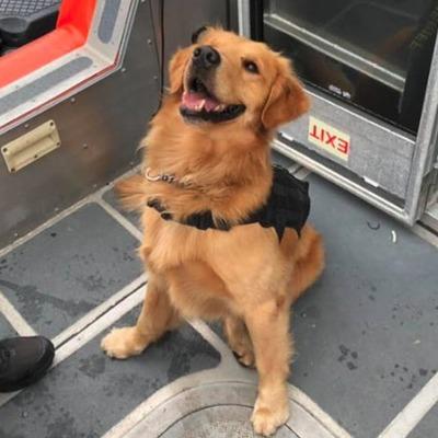 Пес получил передозировку наркотиками во время проверки пассажиров рейв-круиза