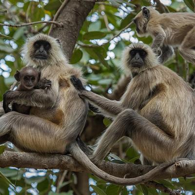 В Индии женщина погибла при попытке сбежать от диких обезьян